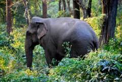 Indie nieznane: Tygrysy Bengalskie