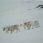 Wyprawa Spitsbergen – lipiec 2020